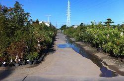 浜北緑化木センター2.jpg
