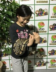 爬虫類7.jpg